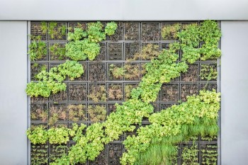 Vertical Garden, Solusi Penghijauan Di Rumah Lahan Minim