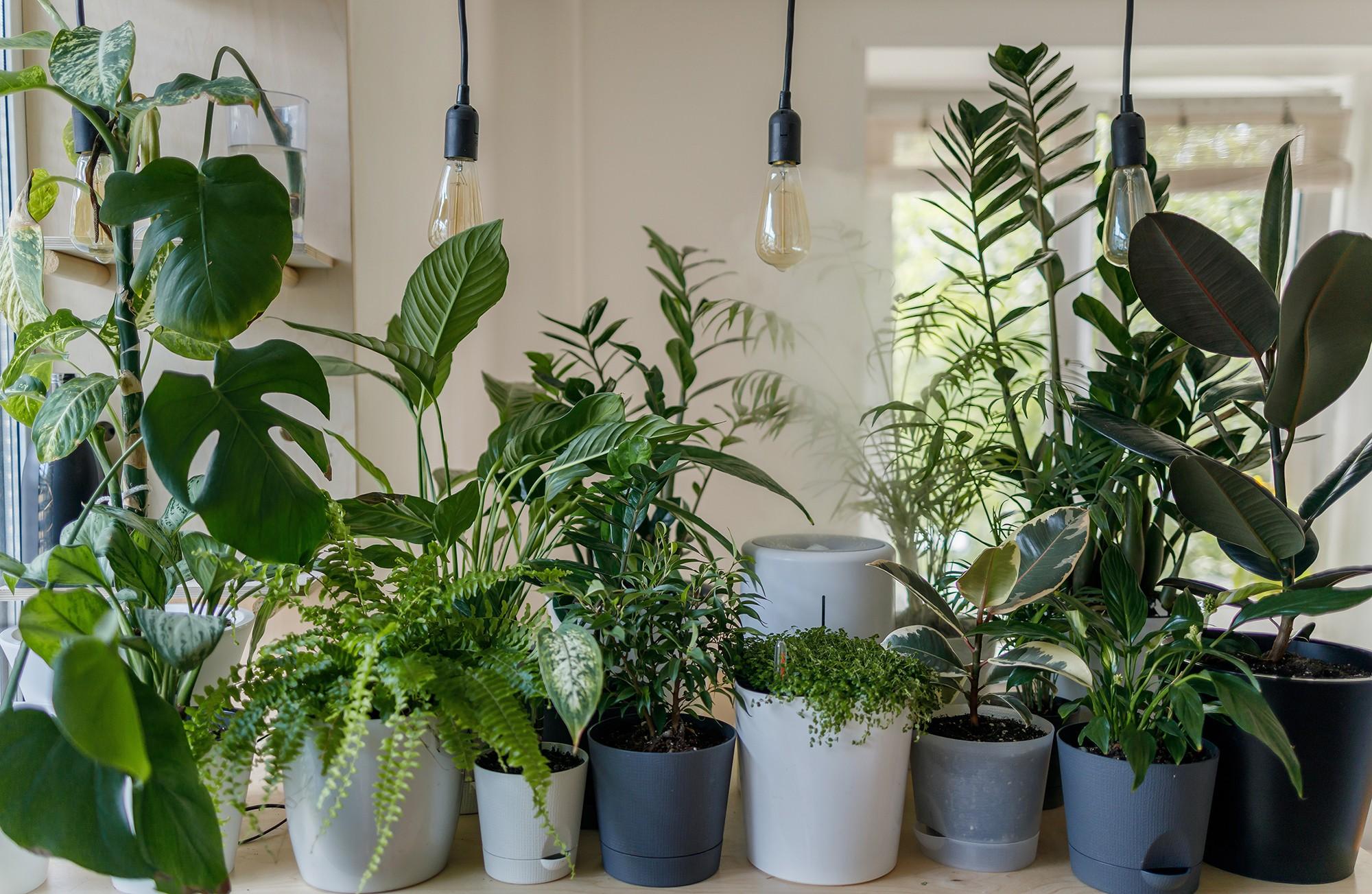 Tips Membuat Taman Di Dalam Rumah