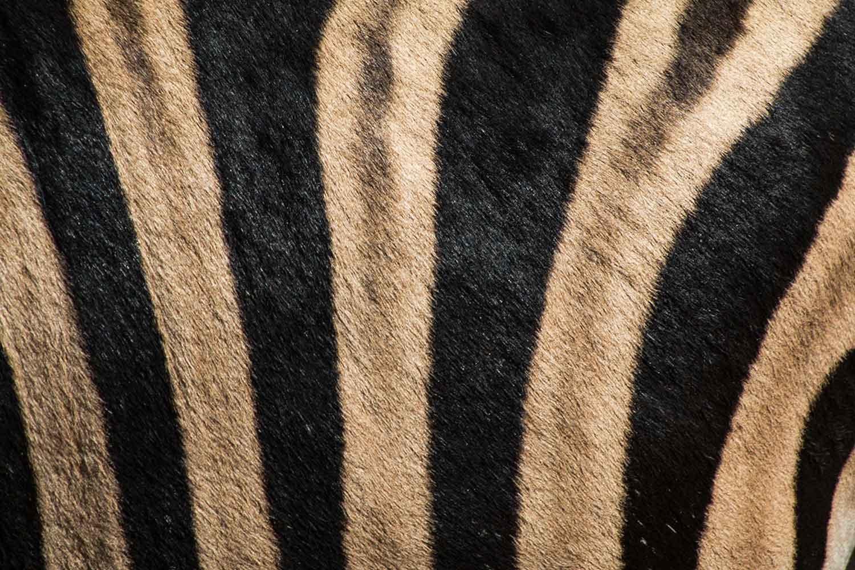 karpet dari kulit