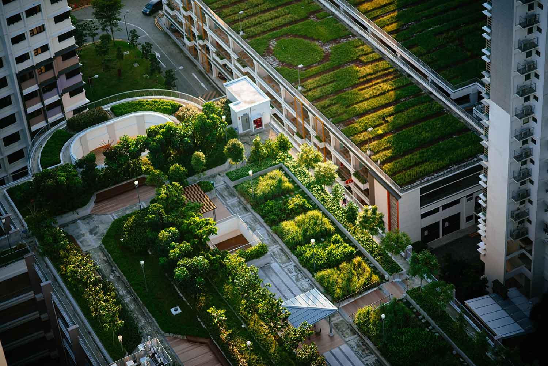 Pemanfaatan Rooftop Untuk Menambah Area Lahan Terbuka Hijau DiRumah